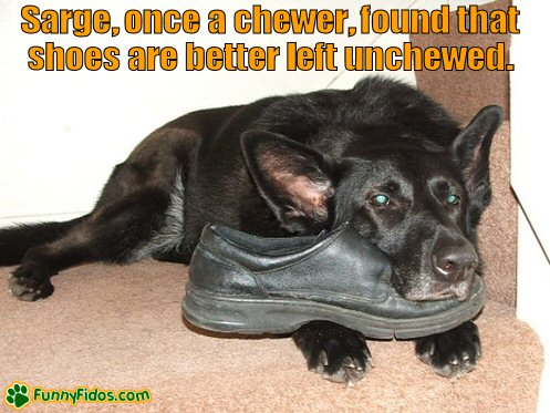 Dog using a shoe as a pillow