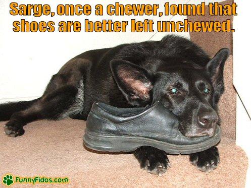 Dog using a shoe as a pillow