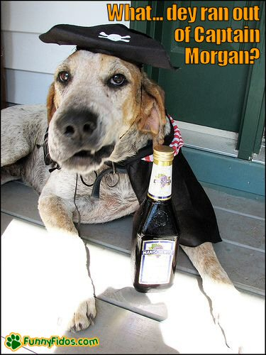Dog in a pirate outfit with a bottle of wine