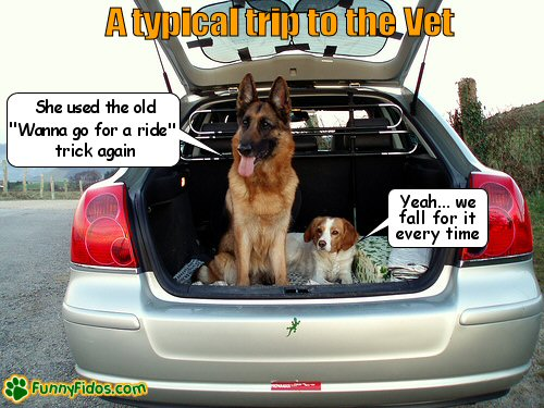 Two dogs not wanting to get out of the car