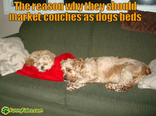 dogs using couch as dog bed