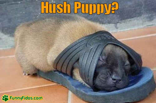 Cute puppy sleeping inside a shoe