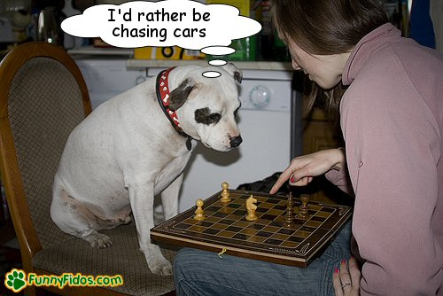 Person and a dog playing chess