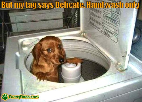 Funny little dog in a washing machine