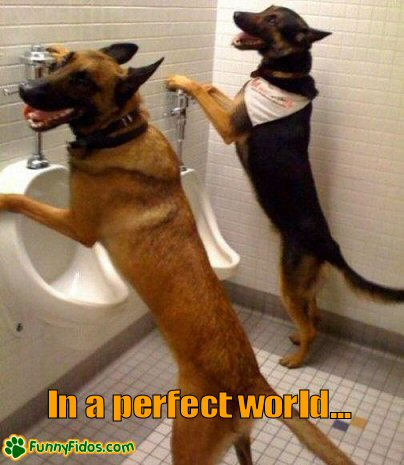Funny picture of two dogs peeing in urinals