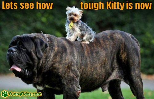 cute little dog hitching a ride on a very big dog