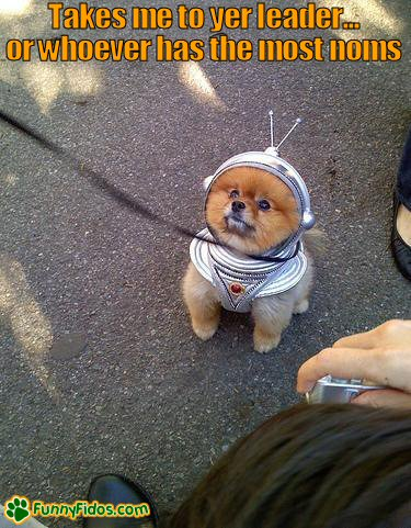 Funny little dog dressed in a spaceman outfit