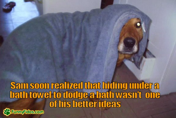 Dog trying to hide from getting a bath