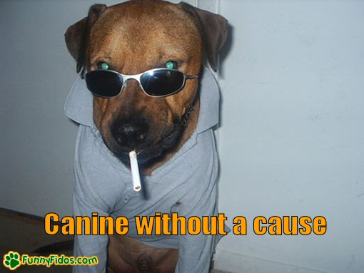 Dog looking tough with a cigarette in his mouth