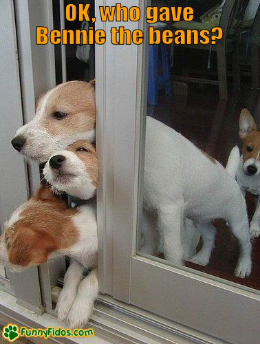 Dogs trying to get some fresh air