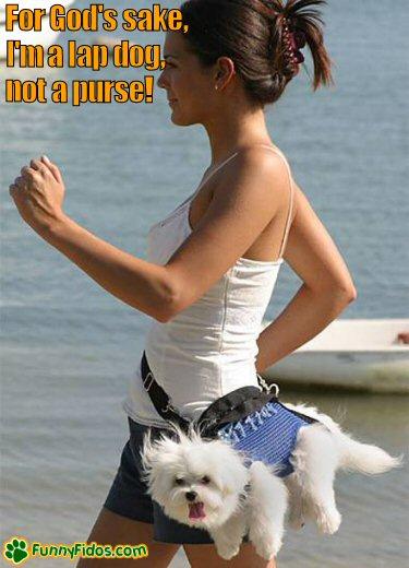 not a dogs idea of a walk