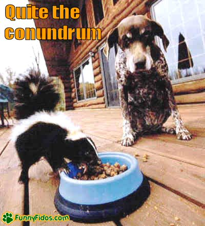 Dog watching a skunk eat his food