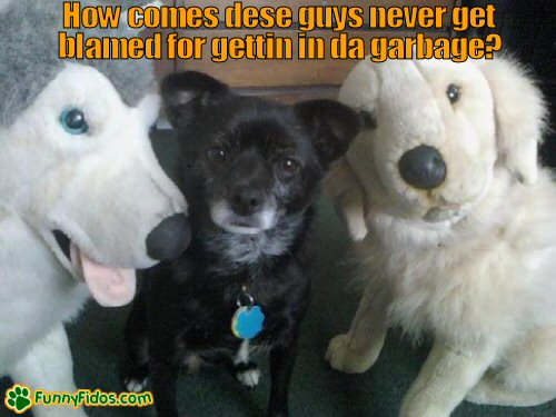 little dog with his stuffed dog pals