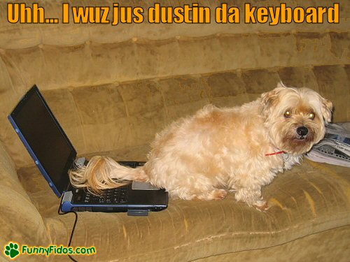 Dog appears to be peeing on laptop keyboard