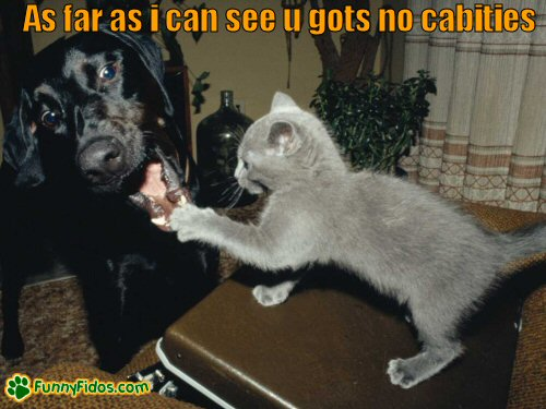 Kitten examining dogs teeth