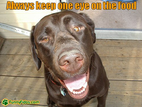 crossed eyed dog