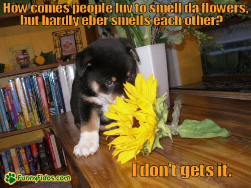 cute little puppy smelling a flower