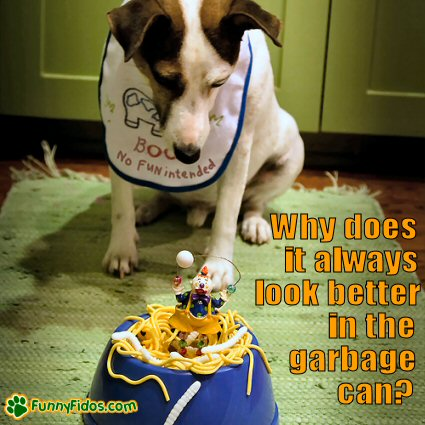 Dog not to impressed with his dinner