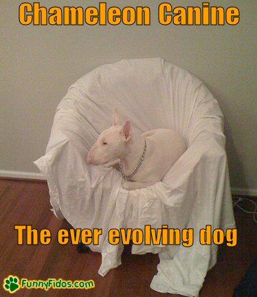 A dog blending into his environment