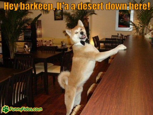Dog at the bar waiting to get served