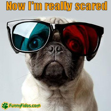 Pug dog wearing 3D glasses