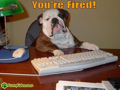 Bulldog sitting at a desk using a computer