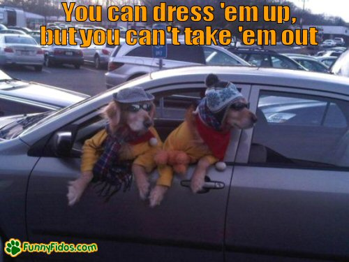Funny dressed dogs