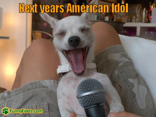 Little dog appears to be singing into a microphone
