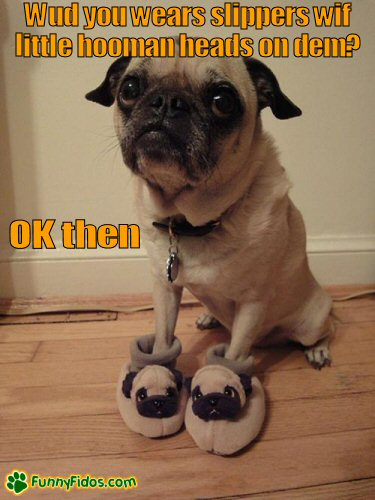 Funny pug dog wearing pug slippers