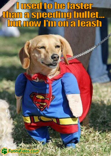 Dog dressed as supperman