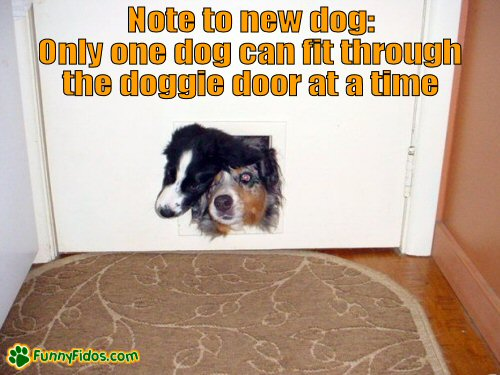 two dogs stuck in the doggie door