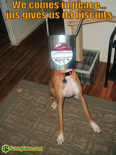 Dog with a martian helmut on
