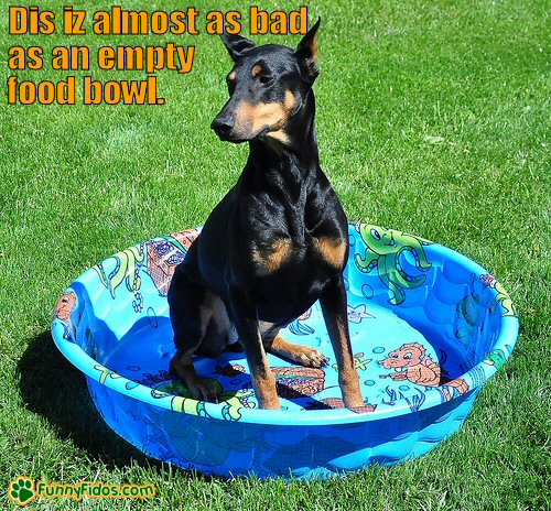 Dog in an empty kiddie pool