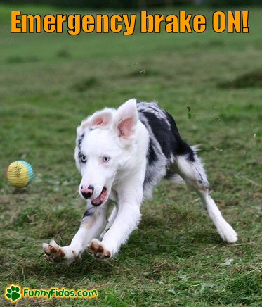 funny dog applying the emergency brake
