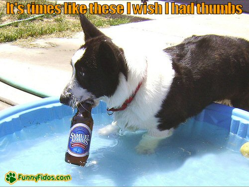 Dog in a pool with a beer