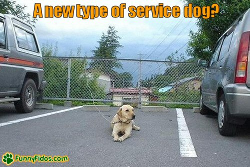 Dog lokks to be saving a parking spot