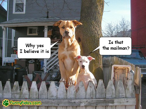 Two dogs waiting for the mailman