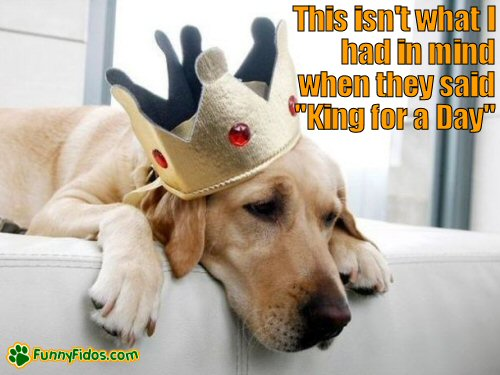 Dog with a king crown on his head