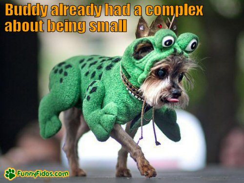 Small dog wearing a green costume