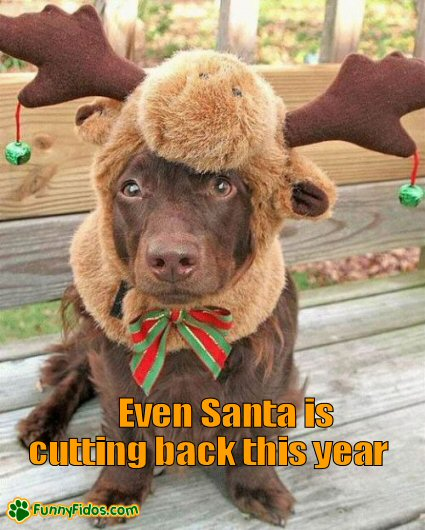 Funny dog wearing reindeer hat