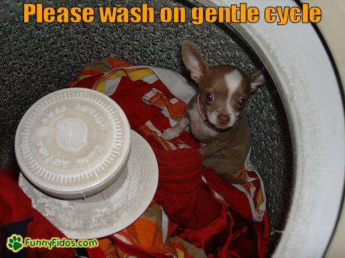 Little dog inside the washing machine