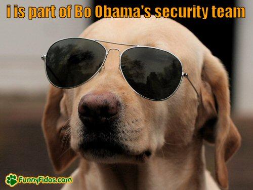 funny dog wearing sun glasses