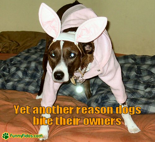 Poor dog dressed in a bunny costume