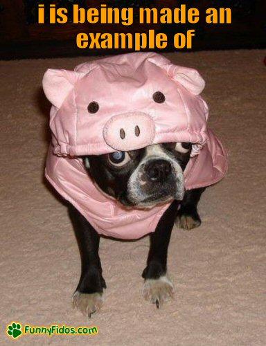Funny dog dressed like a pig