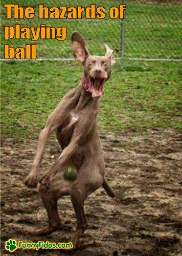 dog playing ball
