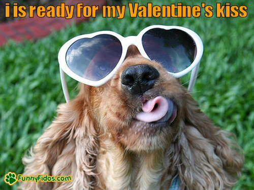 funny dog wearing heart glasses