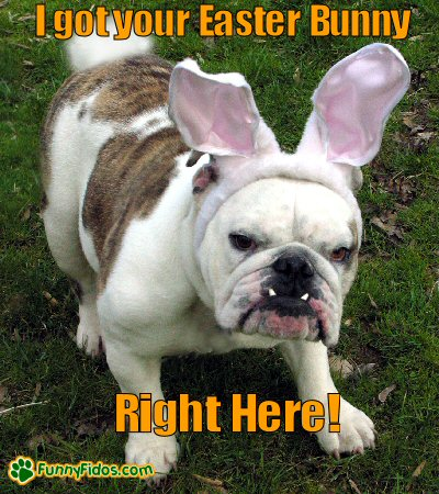 Bulldog dressed as Easter Bunny