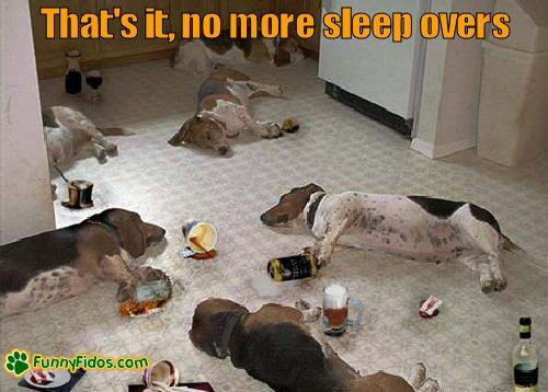 drunken dogs