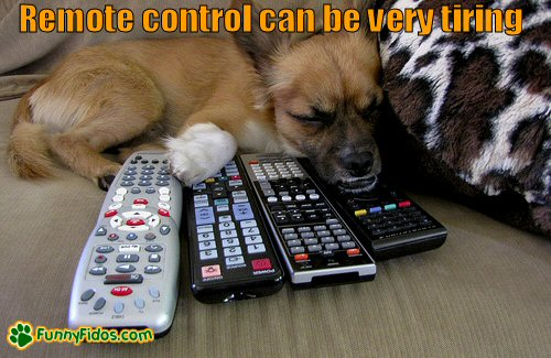 little dog guarding the remotes