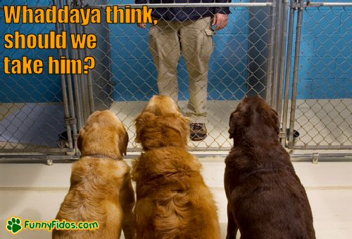 Dogs looking at a man in a cage